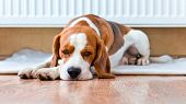 picture of floor heating  - The dog has a rest on wooden to a floor near to a warm radiator - JPG
