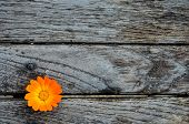 stock photo of hackney  - Marigold on empty grunge wooden table ready for text or product montage display - JPG