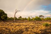stock photo of top-less  - South African landscape of savanna in Botswana with a rainbow - JPG