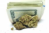 foto of ganja  - Marijuana and Cannabis Plant Details With Money - JPG