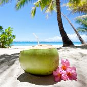 image of tropical food  - Tropical fresh coconut cocktail decorated plumeria on white beach - JPG