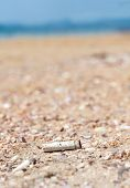 pic of discard  - Cigarette butt discarded left on beach concept photo - JPG