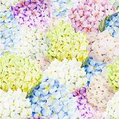 picture of hydrangea  - Beautiful watercolor vector hydrangea pattern different colors - JPG