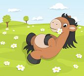 pic of pony  - Cute cartoon pony on the blooming meadow holding daisy - JPG