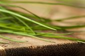 picture of chive  - Raw Organic Green Chives on a Cutting Board - JPG