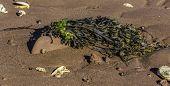 foto of tide  - Seaweed - JPG