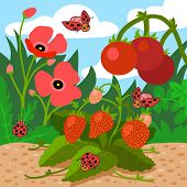 picture of ladybug  - Colors for kids - JPG