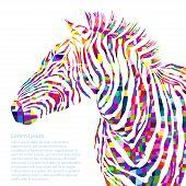 foto of animal silhouette  - Animal watercolor illustration silhouette zebra - JPG