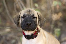 picture of puppy eyes  - A funny puppy has his eyes half closed outdoors - JPG