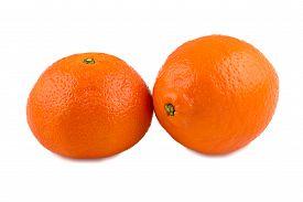 stock photo of tangelo  - Photo of tangerine and minneola on white background - JPG
