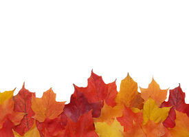 stock photo of fall leaves  - bottom border of colorful fall leaves in red orange and yellow - JPG