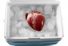 picture of organ  - Heart organ in fridge close up - JPG