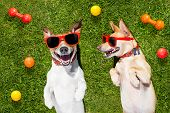 Two Funny Playing Dogs poster
