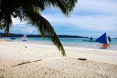 stock photo of olongapo  - A Palm Tree Over looking a Beautiful beach Boracay in Philippines - JPG