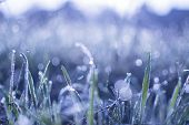 Dew On The Grass. Morning Grass. Bokeh On The Grass. Blue Nature Background. Spring Background. Rain poster