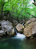 image of irish moss  - Woodland Stream in Sheffrey Wood Ireland - JPG
