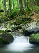 stock photo of irish moss  - Tropical mountain river in the lush forests - JPG