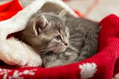 Christmas Cat. Beautiful Little Tabby Sleeping Kitten, Kitty, Cat In Red Santa Claus Hat Near Christ poster