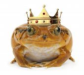 stock photo of orange frog  - Orange frog facing with a crown the camera on a white background - JPG