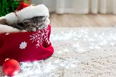 Christmas Cat Wearing Santa Claus Hat Sleeping On Plaid Under Christmas Tree With Blurry Festive Dec poster