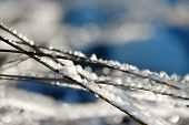 Frozen Grass Is On Sea Coast In Winter. Close-up Of Icing Grass. poster