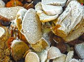 Frost On Pieces Of Discarded Bread On Rubbish Heap poster