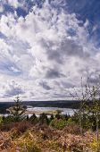 stock photo of square mile  - Kielder national park has the largest man - JPG