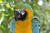 picture of polly  - Colorful Macaw Parrot sitting on the tree branch - JPG