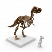 picture of dinosaur skeleton  - The skeleton of a dinosaur in the museum is a huge piece of the old exhibition - JPG