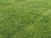 foto of lawn grass  - beautiful green lawn freshly mowed - JPG