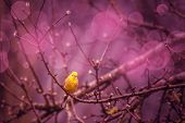 foto of songbird  - High quality photo of bird in nature