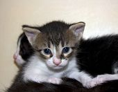 Cute Not Purebred Kitten poster