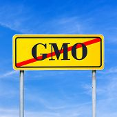 pic of organism  - Yellow traffic sign prohibiting genetically modified organism with the word  - JPG