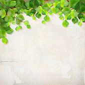 picture of green wall  - Vector season background with tree branches - JPG