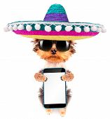 pic of mexican-dog  - cute puppy dog wearing a mexican hat holding phone with empty white screen - JPG