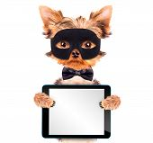 pic of african mask  - super hero puppy dog wearing  black mask and holding blank tablet pc - JPG