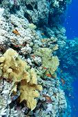stock photo of fire coral  - colorful coral reef with hard corals and exotic fishes at the bottom of tropical sea - JPG