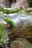 picture of green algae  - Green Plants and Algae on Big Rocks at the River with Clear Water