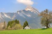 foto of greenery  - house in a greenery landscape in front of mountain - JPG