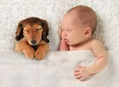 foto of sleeping  - Newborn baby and a dachshund puppy sleeping together - JPG