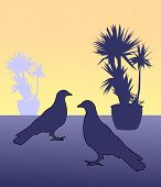 picture of craw  - Silhouettes of two birds and two flowerpots with cactus - JPG