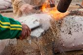 foto of slaughter  - Hair removal of the pig with blowtorch - JPG