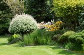 stock photo of conifers  - Beautiful spring garden design with flowering rhododendron and conifers - JPG