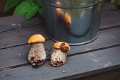 foto of edible mushrooms  - wild edible orange cap boletus mushrooms on wooden bench - JPG