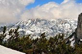 picture of dwarf  - View from Loser peak over dwarf pine trees and summits covered with snow Dead Mountains  - JPG