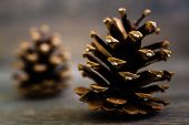 image of pine cone  - Three pine cones nice and dry on brown wooden table - JPG