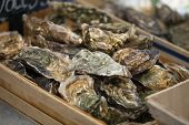 picture of shell-fishes  - Traditional  fish market stall full of fresh shell oysters - JPG