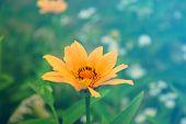 image of yellow flower  - cute yellow summer flower - JPG