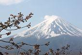foto of mount fuji  - Mount Fuji and sakura not blossom at Kawaguchiko lake side - JPG