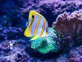 pic of saltwater fish  - Colorful fish in aquarium saltwater world - JPG